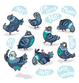 set of cartoon pigeons design for stickers pins vector image vector image