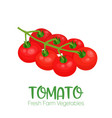 tomato isolated on white background vector image vector image