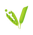 two pods of green pea natural and healthy food vector image