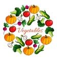 Vegetables harvest poster of vegetarian veggies vector image