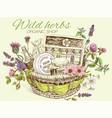 Herbal cosmetics basket vector image vector image
