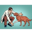 vet dog wounded paw vector image