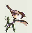 drawing of the bird vector image vector image