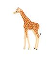 giraffe on white vector image