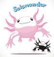 Salamander 3 vector image vector image