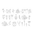 sketch floral botany collectionwedding flowers vector image