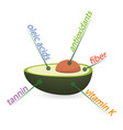 avocado content properties and benefits vector image vector image