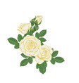beautiful bouquet with white roses and leaves vector image vector image