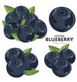 Blueberry Set vector image