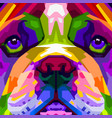 colorful close up english bulldog on pop art vector image vector image