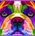 colorful close up english bulldog on pop art vector image