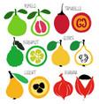 brush grunge exotic fruits icons set vector image