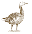 goose vector image vector image