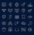 human internal organs icon set in thin line style vector image vector image