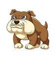 dashing bulldog is standing with big body vector image