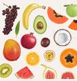 jaw dropping hand drawn summer fruits vector image vector image