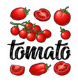 set hand drawn tomatoes and calligraphic vector image vector image