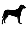 silhouette of a standing dog with body details vector image