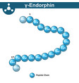 gamma endorphin chemical formula vector image vector image