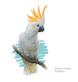 sulphur-crested cockatoo detailed vector image