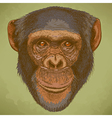 engraving chimp retro vector image vector image