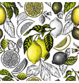 lemon tree seamless pattern hand drawn fruit vector image vector image