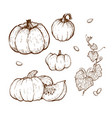 pumpkin drawing set vector image vector image