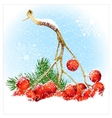 Christmas snow background with rowan vector image