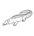 hand drawn crocodile linear style line vector image