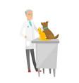 senior caucasian veterinarian examining pets vector image vector image