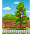 Boy climbing apple tree vector image vector image