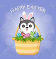 cute little dog husky with bunny ears is sitting vector image
