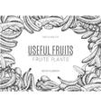 design bananas sketchesdetailed citrus vector image