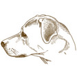 engraving labrador retriever cur head vector image vector image