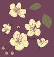 sakura flower set2 vector image vector image