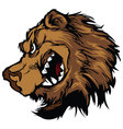 bear grizzly mascot head cartoon vector image vector image
