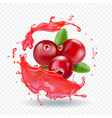 cranberry in juice splash realistic vector image vector image