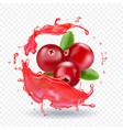 cranberry in juice splash realistic vector image