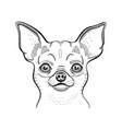 cute chihuahua t-shirt print design cool animal vector image