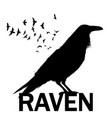 graphic black and white crow isolated on white vector image vector image