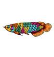 arowana fish entangle with beautiful vector image