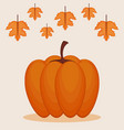 colorful pumpkin autumn symbol vector image vector image
