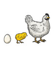 egg chicken and hen sketch vector image