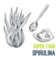 spirulina super food hand drawn sketch vector image vector image
