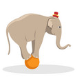 circus trained elephant on the ball vector image vector image