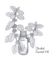 drawing menthol essential oil vector image vector image