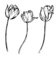 set drawing flowers vector image
