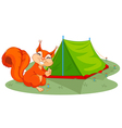 squirrel sets tent vector image vector image