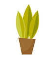 green plant in a pot cartoon vector image