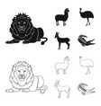 lama ostrich emu young antelope animal vector image vector image